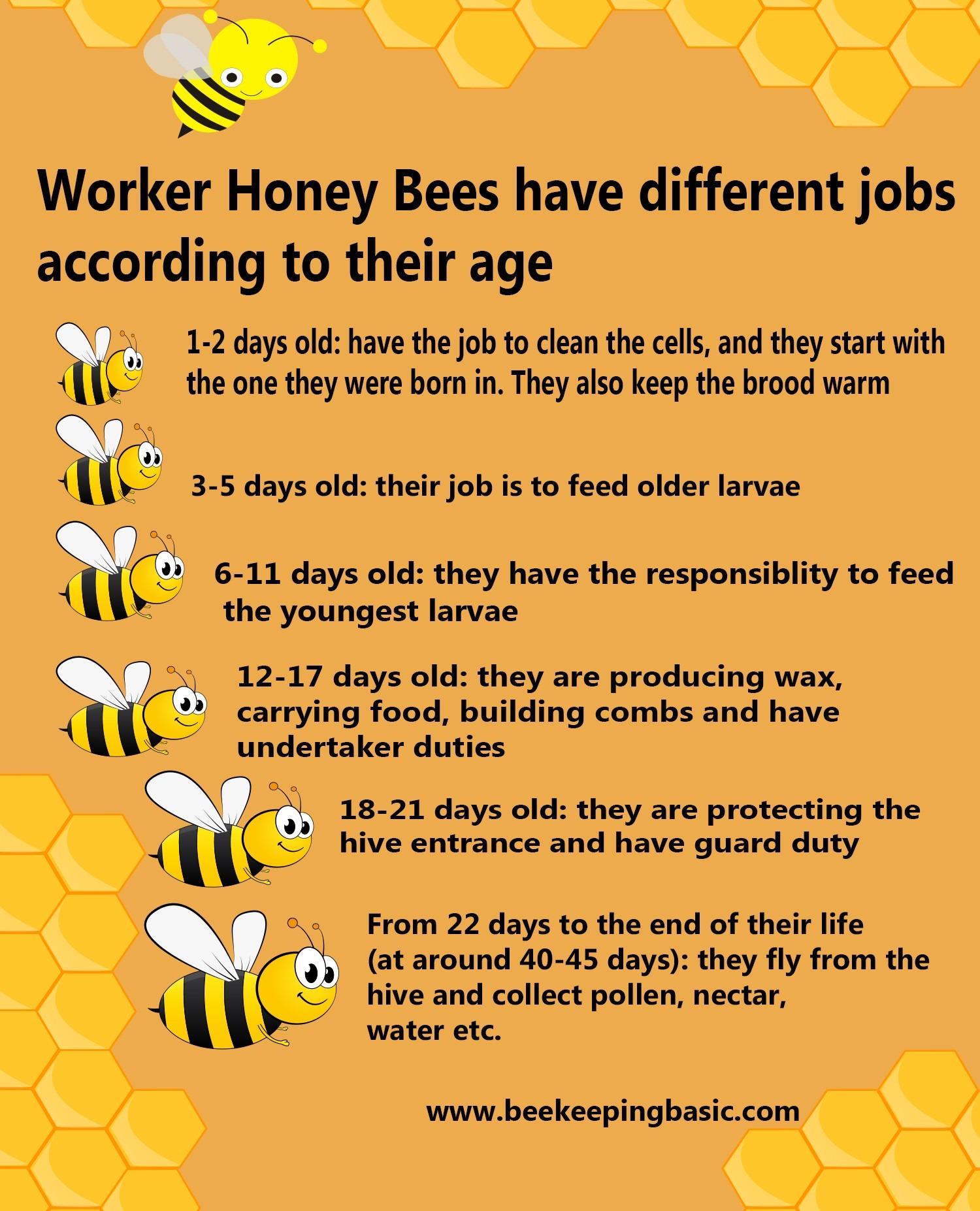 honey bees job